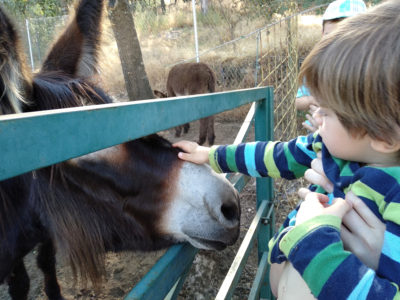Acariciando un burro